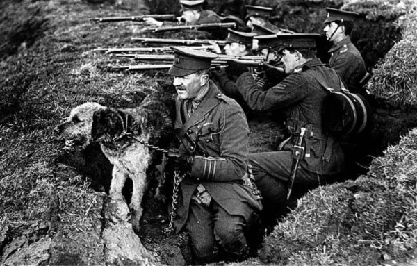 An Irish Terrier - Dogs of War, #3 of 100 Bloody Objects
